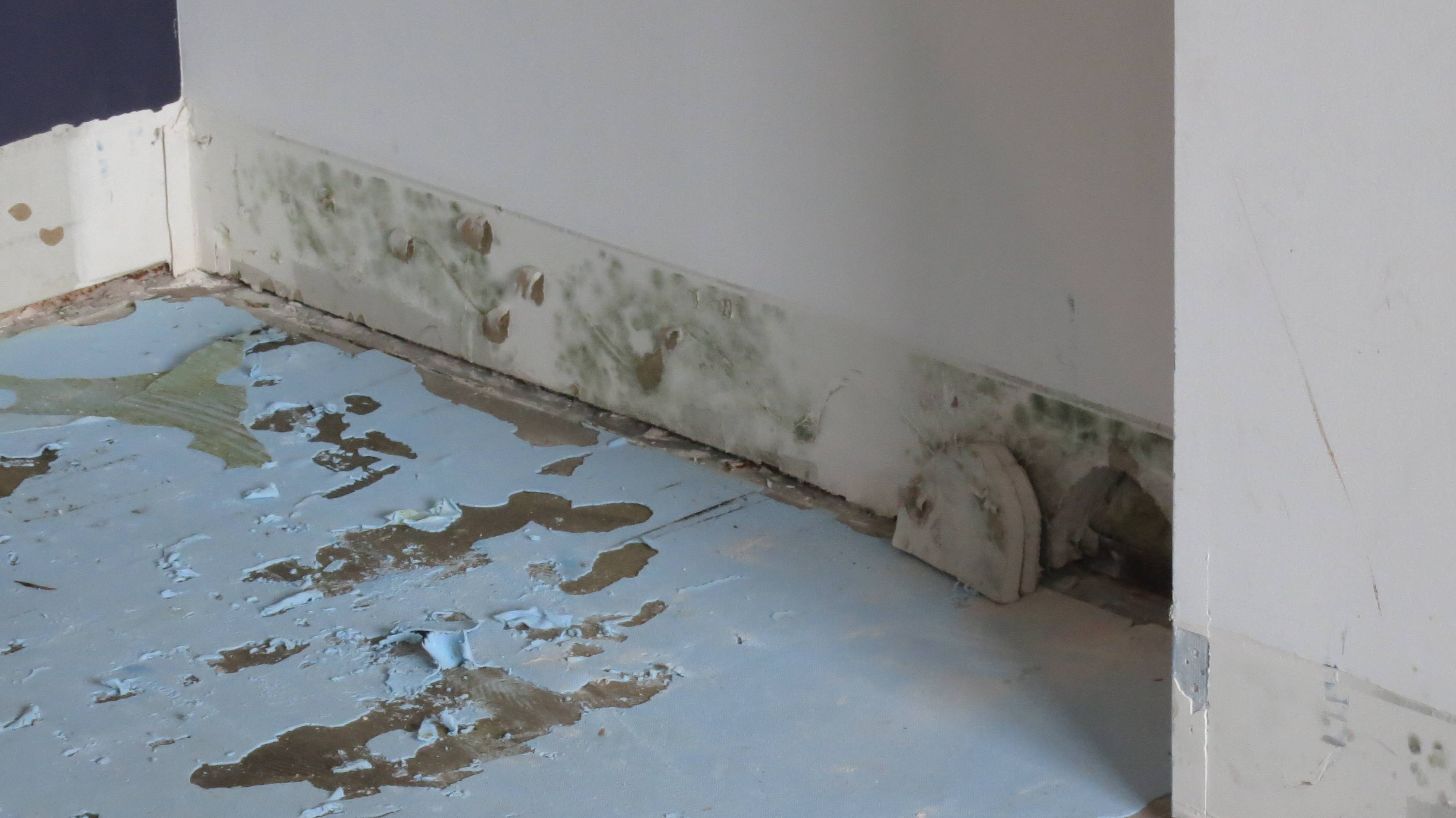 How to remove Mildew Build-up from the house