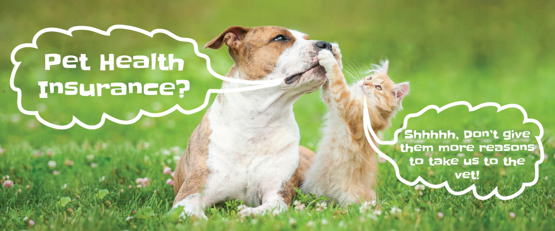 Dog Health Care Insurance Facts And Info