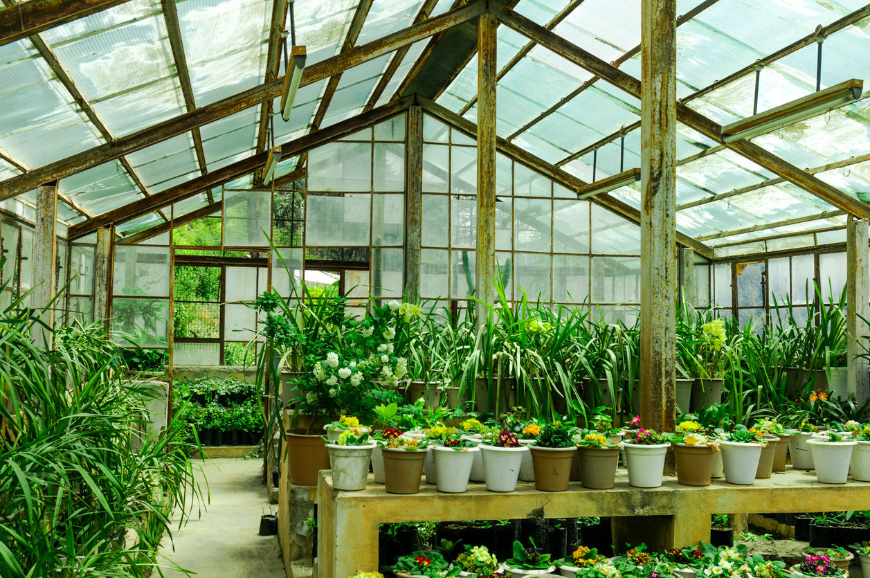 What Are The Requirements To Build A High-Quality Greenhouse Cheaply?