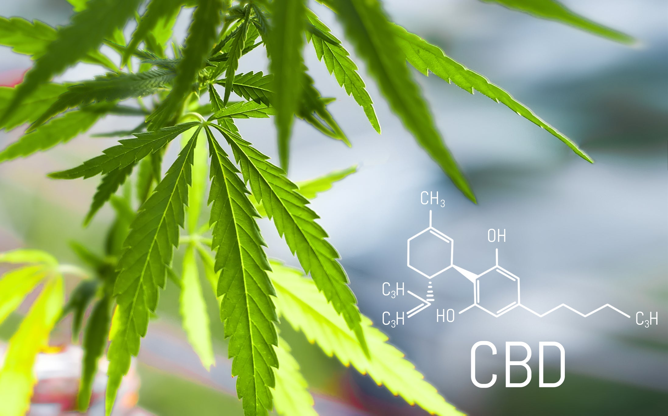 CBD for Dogs: Research & Treatment Guide